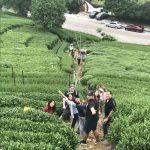 Study-Abroad-in-Hangzhou-Longjing-tea-valley-768x1024